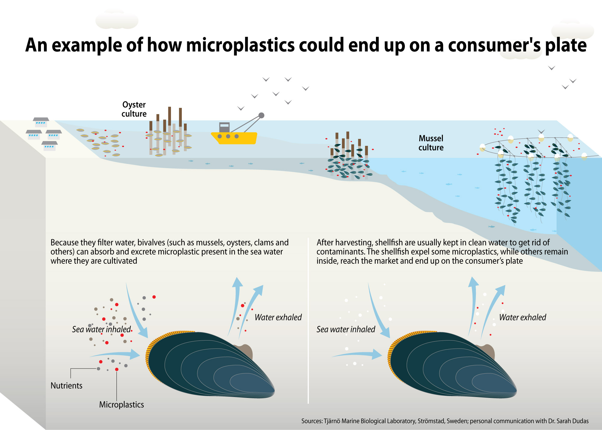 how microplastic could end up on a consumer's plate